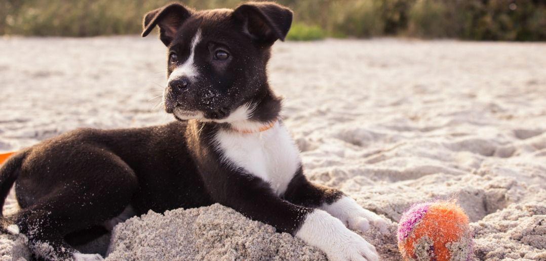 Runifico-Top-10-Tipps-Laufen-mit-Hund
