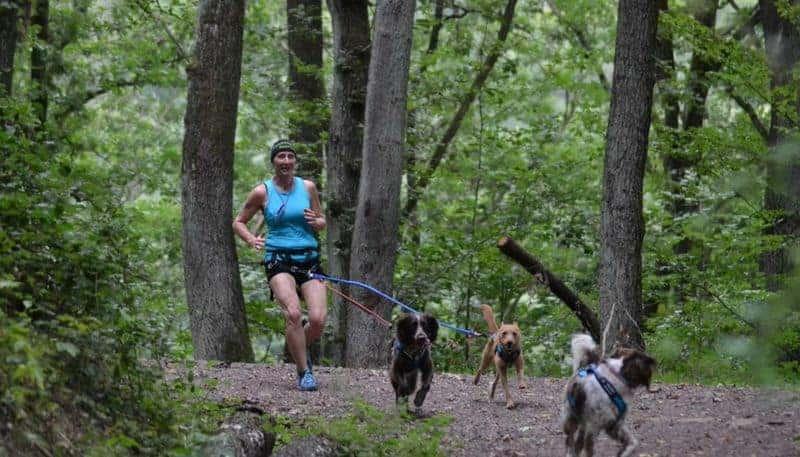 Canicross Hund Wald