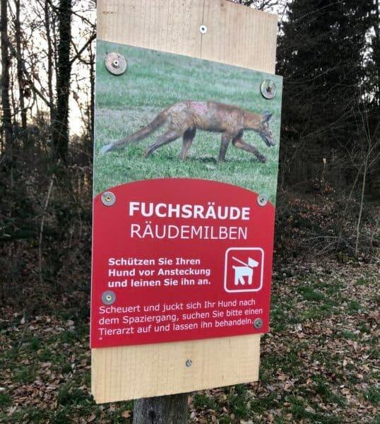 Fuchsräude beim Hund